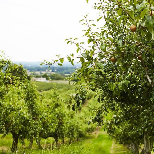 Westerhill Farm Views